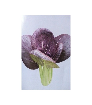 semillas de pak choi purpura