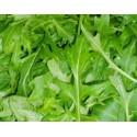 semillas de mizuna - mostaza jponesa