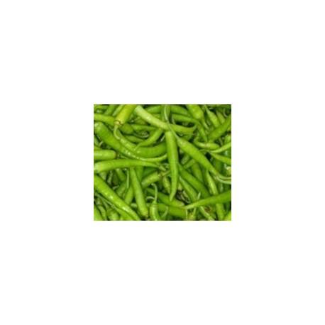 semillas de guindilla ibarra