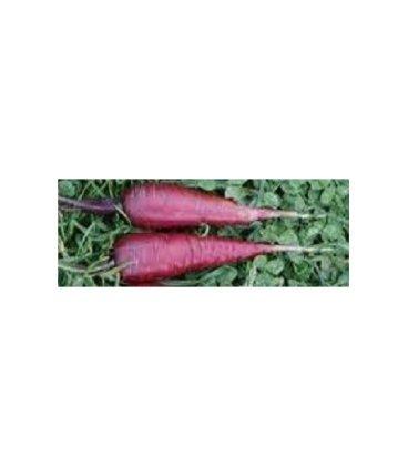 semillas de zanahoria cosmic purple