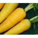 zanahoria amarilla lobbericher