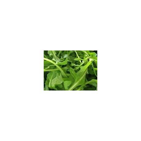 semillas de rucula