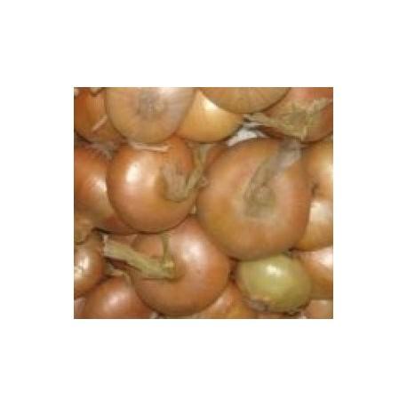 semillas de cebolla amarilla paja de las virtudes