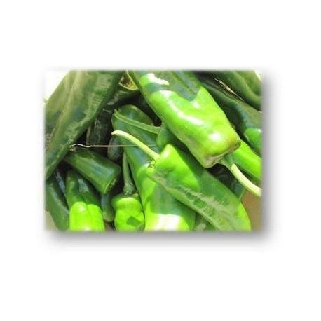 semillas de pimiento dulce italiano