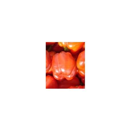 semillas de pimiento dulce de España