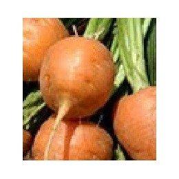 semillas de zanahoria parisina