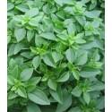 Albahaca de hoja fina (semillas ecológicas)