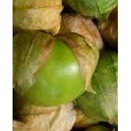 physalis ixocarpa verde - semillas no tratadas