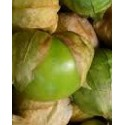 physalis ixocarpa verde - semillas ecológicas