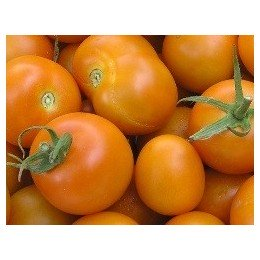 semillas de tomate jaune flamme