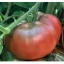 semillas ecológicas de tomate negro de Crimea