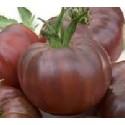 tomate cherry negro ruso (semillas ecológicas)