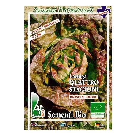 lechuga cuatro estaciones - semillas ecológicas