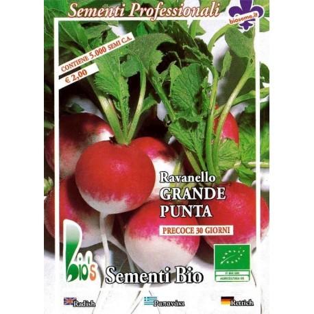 semillas ecológicas de rabanito de punta grande