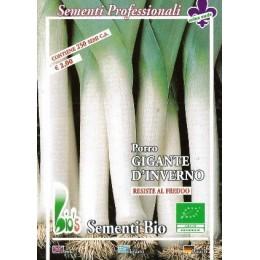 puerro gigante de invierno - semillas ecológicas