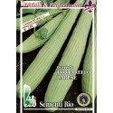 pepino tortarello de Bari - semillas ecológicas