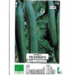 pepino telegrafo (semillasa ecológicas)
