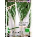 semillas ecologicas de acelga de penca larga de Barí