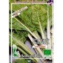 acelga de Trieste - semillas ecológicas