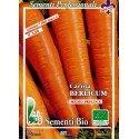 zanahoria berlicum - semillas ecológicas