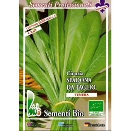 achicoria spadona - semillas ecológicas