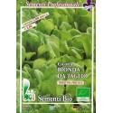 semillas ecológicas de achicoria verde de tallo