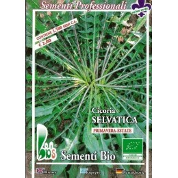 achicoria silvestre - semillas ecológicas