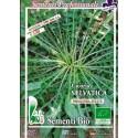 semillas ecologicas de achicoria silvestre