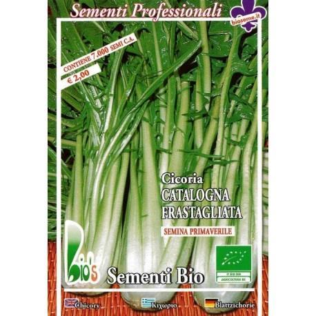 semillas ecológicas de achicoria spadona