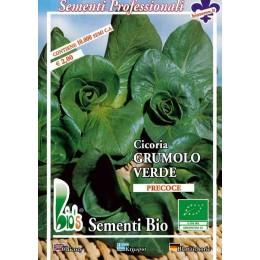 achicoria grumolo verde - semillas ecológicas