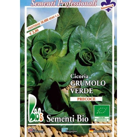 semillas ecológicas de achicoria grumolo verde
