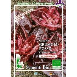 achicoria grumolo rojo - semillas ecologicas