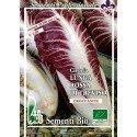 achicoria rossa di Treviso - semillas ecológicas