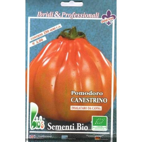 semillas ecologicas de tomate canestrino - www.planetasemilla.es