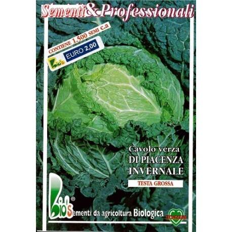 semillas ecologicas de repollo invernal tardio de Piacenza