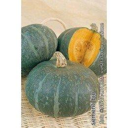 semillas ecológicas de calabaza blu kury