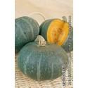calabaza blu kury (semillas ecológicas)