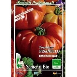 costoluto fiorentino (Pisanello de Bruschetta) semillas ecologicas