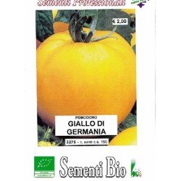 tomate amarillo de Alemania - golden boy (semillas ecológicas)