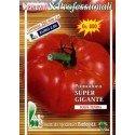 tomate gigante malizia (semillas ecologicas)