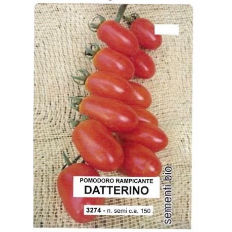 tomate datterino (semillas ecologicas)