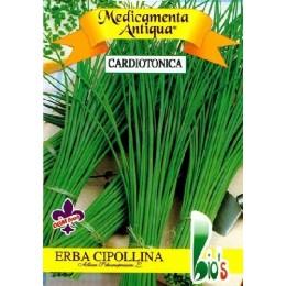 cebollino - Allium schoenoprasum - (semillas ecológicas)
