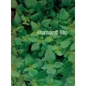 mejorana (majorana hortensis) - semillas ecologicas