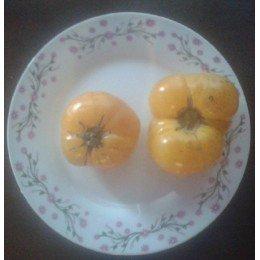 semillas de tomate azoychka