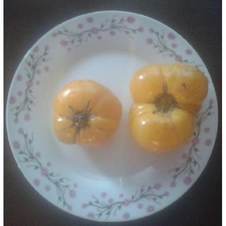 tomate azoychka