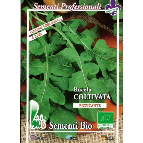 semillas ecologicas de rucula cultivada