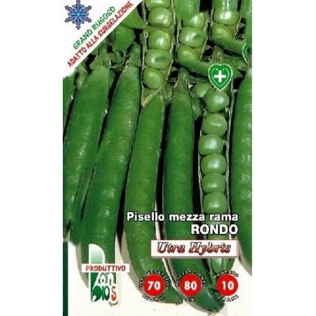 guisante Rondo ultra hybris - semillas ecológicas