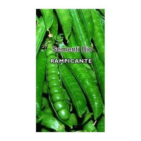 guisante san Cristoforo - semillas ecológicas - www.planetasemilla.es