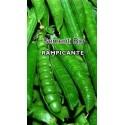 guisante san Cristoforo - semillas ecológicas