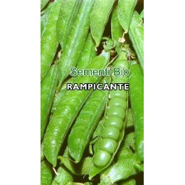 guisante lavagna extra - semillas ecológicas